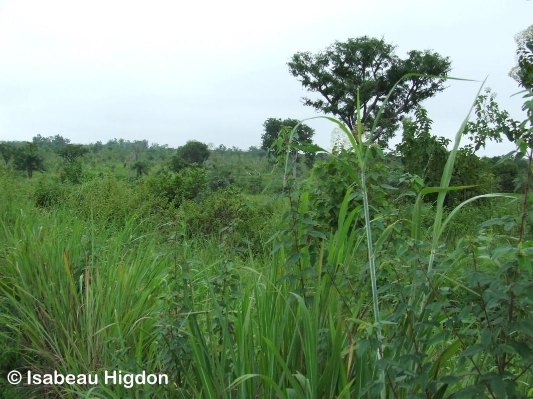 Buschlandschaft in der Regenzeit
